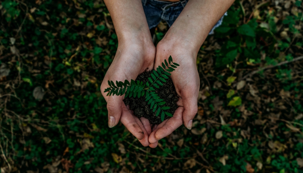 Person holding fragile green plant and earth in their hands